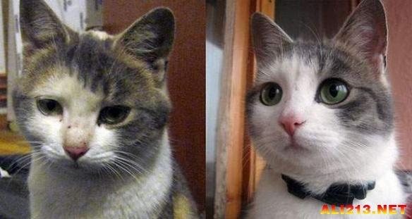 【游侠导读】下面这些照片记录了动物们被领养前后的变化,这些变化更多的是心理上的,而不是身体上的,那些出现在脸上的笑容是发自内心的。如果你正在考虑养一只宠物,请你领养一只,告诉它们不是被人遗弃的,更加不要放弃它们!