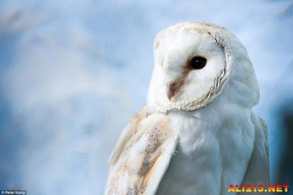 英摄影师镜头下的野生动物