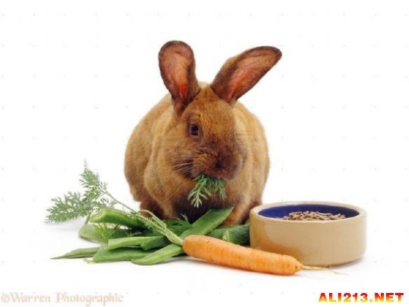 兔子最爱的不是胡萝卜?盘点有关动物的十个谬误