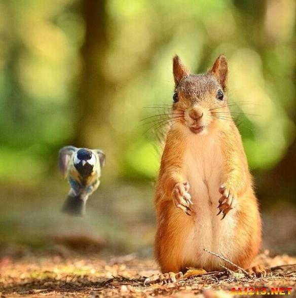 喂食小动物捕捉瞬间萌态