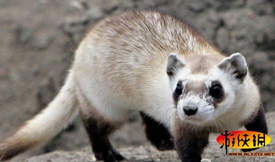 地球濒危动物物种之一