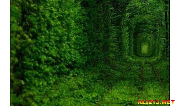 13个最浪漫的植物隧道 带上妹纸去吧