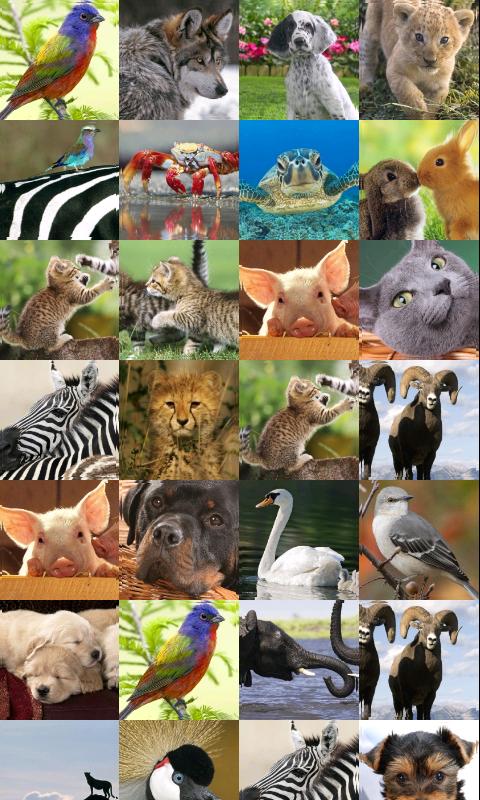 相同的动物游戏截图
