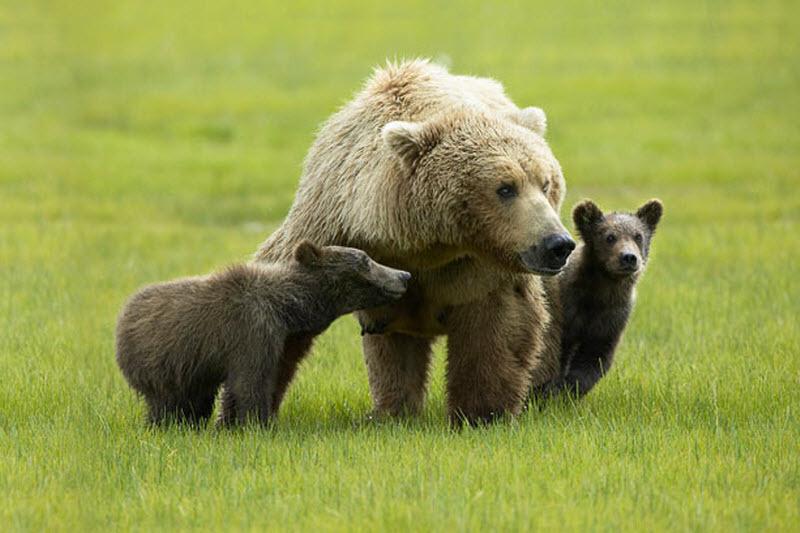杂谈:动物家庭温馨有爱瞬间
