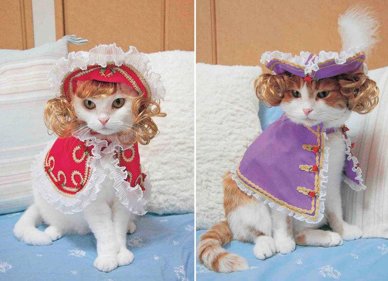 设计师制作60套猫咪时尚定制服