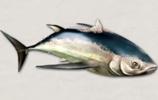 盖提金枪鱼