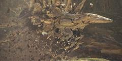 《怪物猎人世界》骨锤龙弱点是什么?骨锤龙打法图文指南