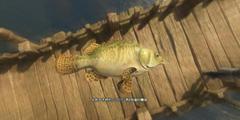 《古剑奇谭3》全鱼种位置一览 鱼类图鉴大全