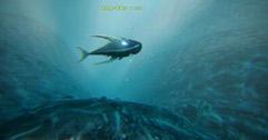 《ATLAS》怎么捕鱼 阿特拉斯钓鱼及鱼饵获得方法介绍