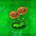 孪生向日葵