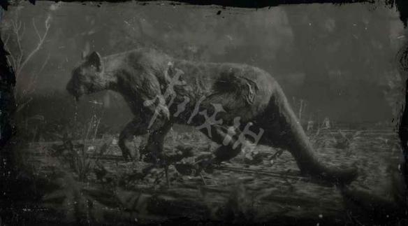 《荒野大镖客2》山狮在哪里 传奇山狮位置分享