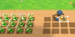 《牧场物语再会矿石镇》农作物收获技巧分享 农作物怎么收获?