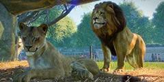 《动物园之星》双峰骆驼宫殿建造方法视频 双峰骆驼宫殿怎么建?