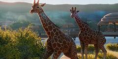 《动物园之星》地形道路入门教学视频 快捷键有哪些?
