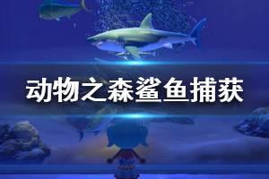 《集合啦动物森友会》鲨鱼怎么钓 鲨鱼捕获方法介绍