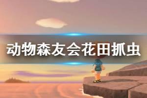 《集合啦动物森友会》花田抓虫法怎么用 花田抓虫法赚钱技巧一览
