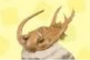 《集合啦动物森友会》化石图鉴一览 游戏化石有哪些?