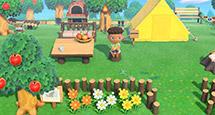 《集合啦动物森友会》全植物图鉴表一览 全植物价格介绍