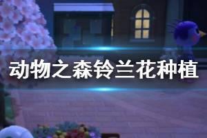 《集合啦动物森友会》铃兰花种植小技巧 铃兰花怎么摘?
