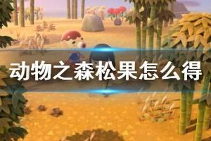 《集合啦动物森友会》松果怎么获得 松果获取方法介绍