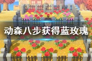 《集合啦动物森友会》蓝玫瑰如何快速获得 八步获取蓝玫瑰方法介绍