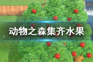 《集合啦动物森友会》怎么集齐水果 集齐水果方法介绍