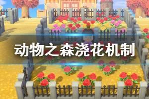 《集合啦动物森友会》浇花有什么用 浇花机制介绍