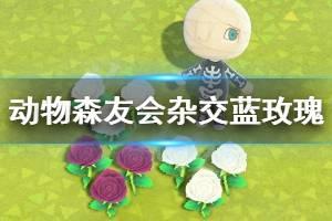 《集合啦动物森友会》杂交蓝玫瑰方法介绍 怎么杂交蓝玫瑰?
