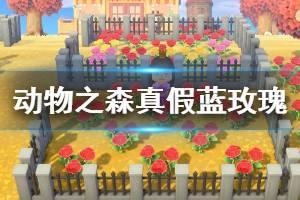 《集合啦动物森友会》怎么确定蓝玫瑰的真假 蓝玫瑰真假判断方法介绍