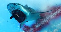 《食人鲨》需要什么配置 游戏配置要求一览