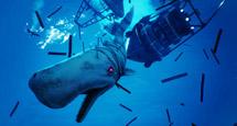 《食人鲨》Maneater收集攻略心得 Maneater怎么玩?