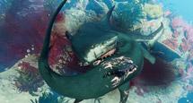 《食人鲨》进化形态有哪些?Maneater进化形态外观图鉴大全