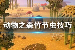 《集合啦动物森友会》竹节虫怎么抓 竹节虫捕捉技巧介绍