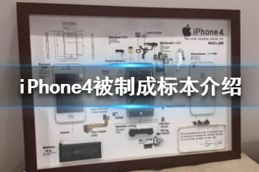 iPhone4被制成标本是怎么回事 iPhone4被制成标本介绍