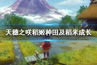 《天穗之咲稻姬》种田周期及稻米成长注意事项一览表