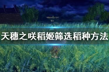 《天穗之咲稻姬》筛选稻种方法介绍 怎么筛选稻种?