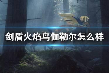 《宝可梦剑盾》火焰鸟伽勒尔怎么样?伽勒尔火焰鸟对战心得分享