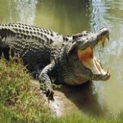 愤怒的鳄鱼袭击2021