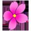 櫻花飄落動態壁紙