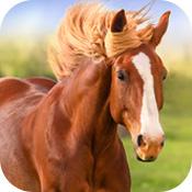 那匹马ios版破解版